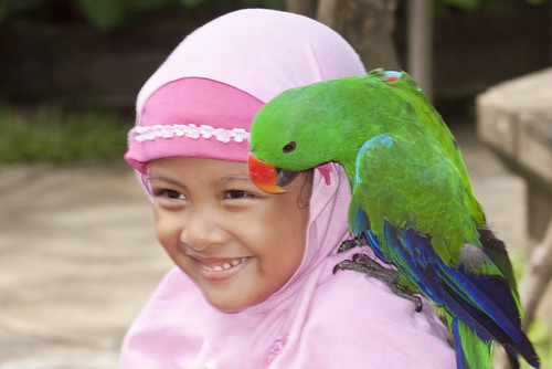 Islamic Girl Enjoying a Parrot
