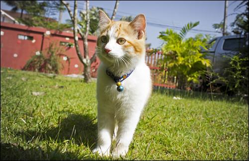 Giacomo Cat