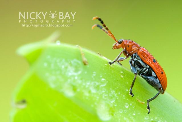 Beetle - DSC_8130