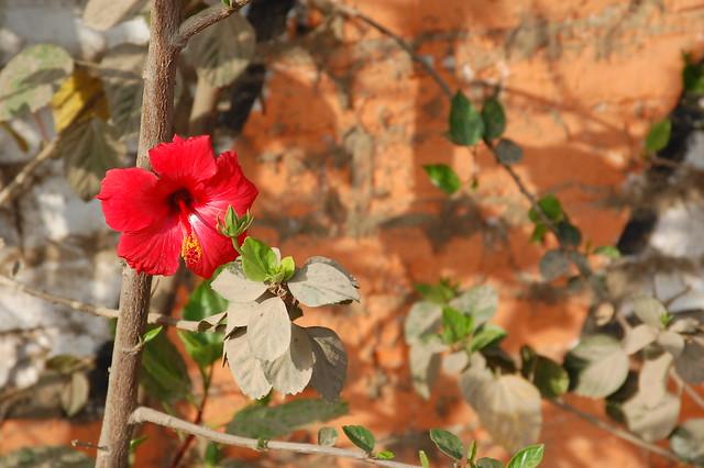 Nice Little Blossom