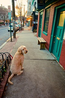 Dog on Wickenden Street by Armadillo Commander via I {heart} Rhody