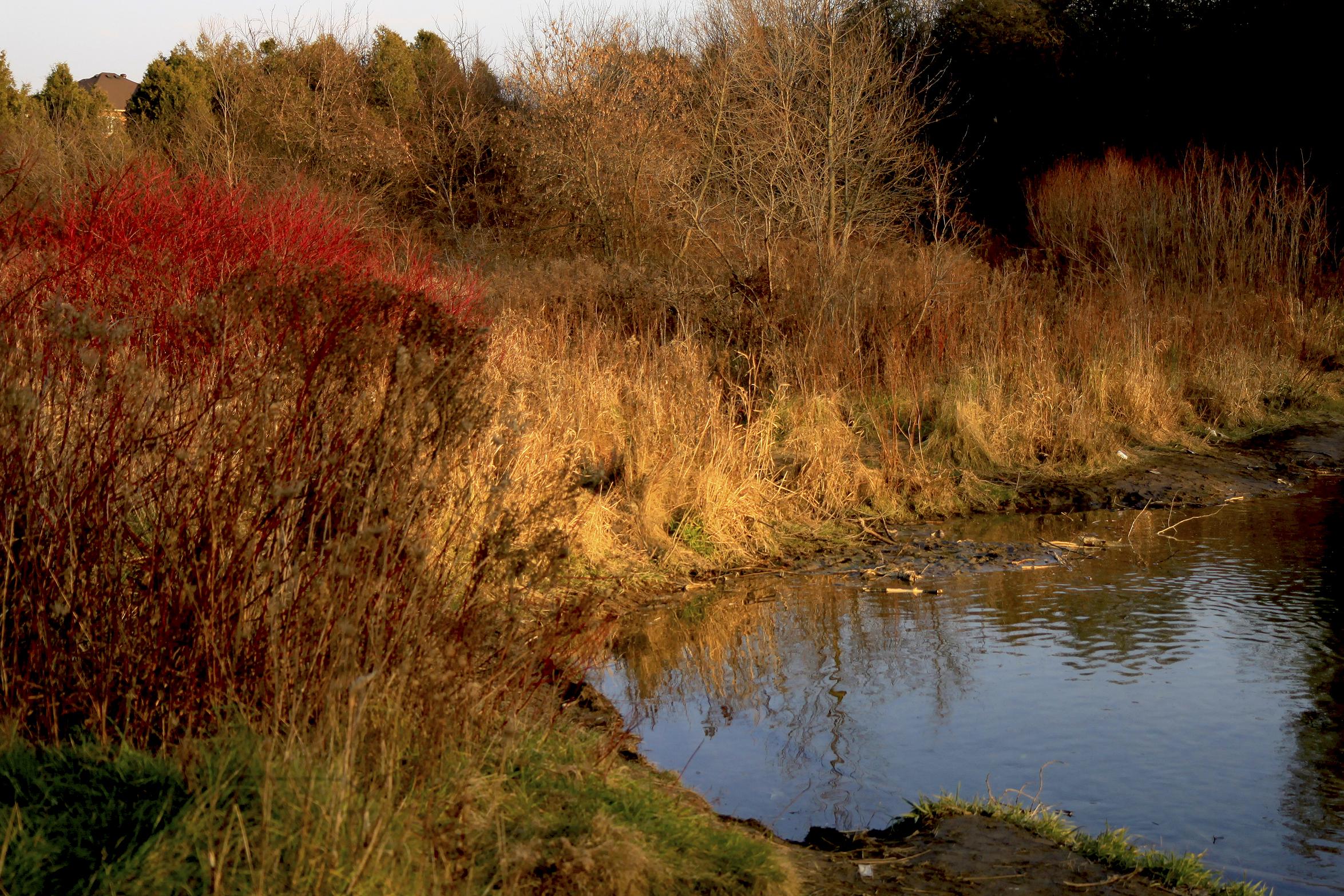 november creek