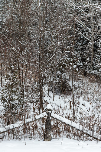 winter snow cold rural forest fence mom woods lindsay