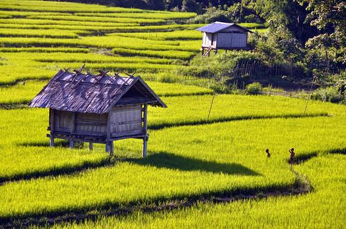 Rismark i Laos