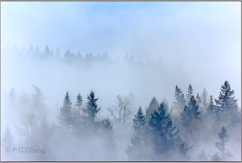 winter mist mountain tree fall nature fog clouds forest sunrise canon garden season landscape woods evergreen valley cascade cloudscape raincloud cascademountains duglasfir pcchang rememberthatmomentlevel1 rememberthatmomentlevel2 rememberthatmomentlevel3 dougfirforest