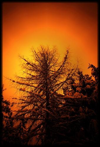 winter tree january pinhole evergreens me2youphotographylevel1