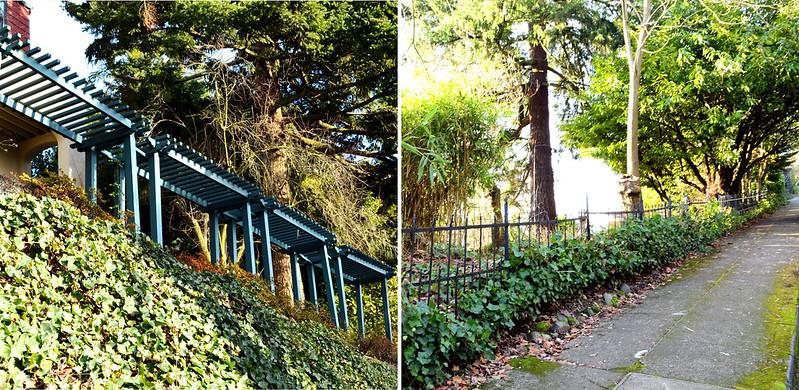 Ivy Walkways