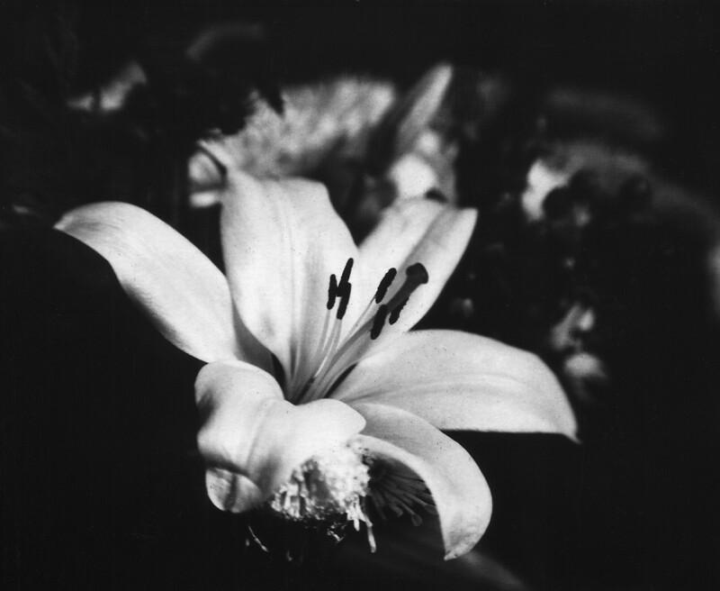 Flower001a