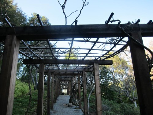 Hakone Japanese Gardens, Saratoga, CA IMG_2371