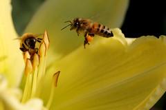Pollen Hunting