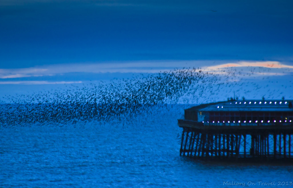 Flocking birds over North Pier on the Fylde Coast near Blackpool on Mallory on Travel, adventure, photography Iain Mallory-300-6