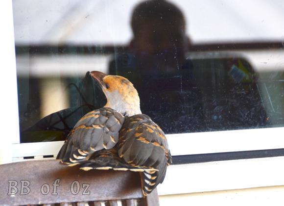 bird_6682 e