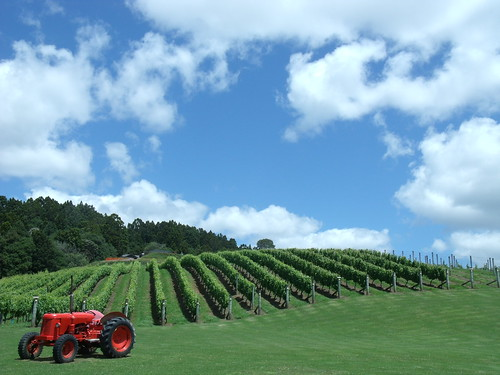newzealand vineyard beverage winery ascension anggur wineestate matakana minuman selandiabaru kebunanggur