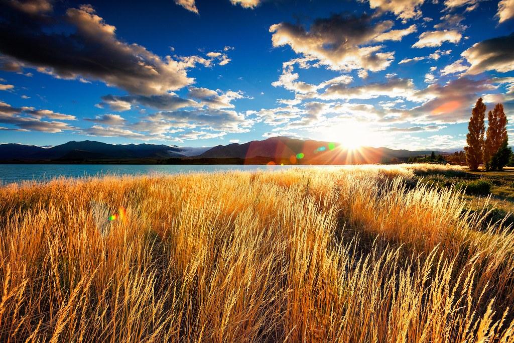 Golden Morning in Tekapo