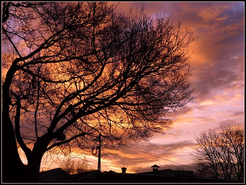 tree silhouette oregon sunrise portland rooftops wires ribbet treemendoustuesday scavchal