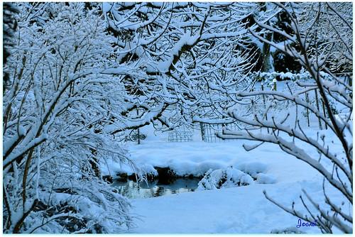 Petit étang en hiver by Jogabi-Michèle