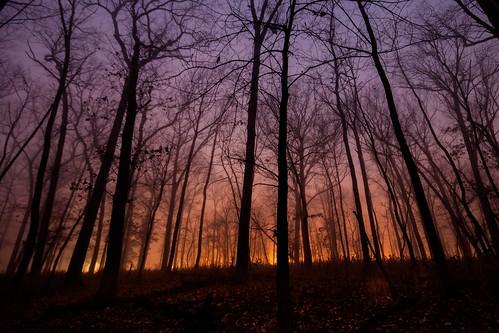 trees fog canon twilight silouhette 500d forestpreservedistrictofdupagecounty t1i kevinrodde kevinroddephoto kevinroddephotography
