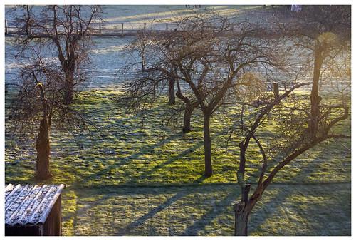 uk morning england tree sunrise shadows cambridgeshire needingworth