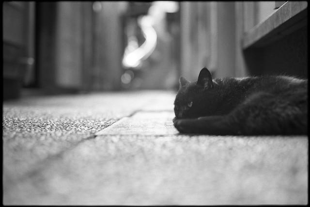 Black cat met at Kazuemachi in Kanazawa
