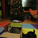 cat in a box, basking in the glow of the newly strung xmas lights    MG 0556