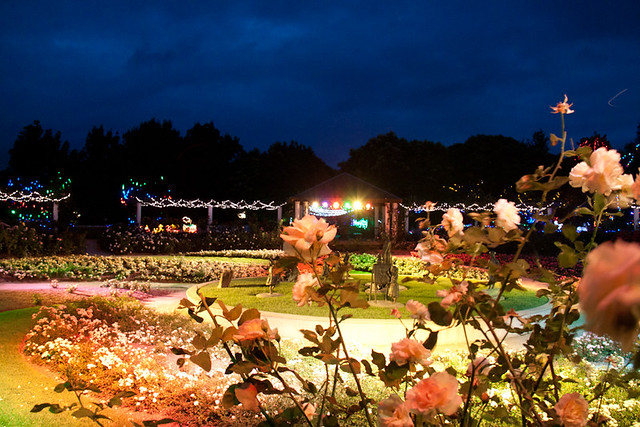Rose garden lights