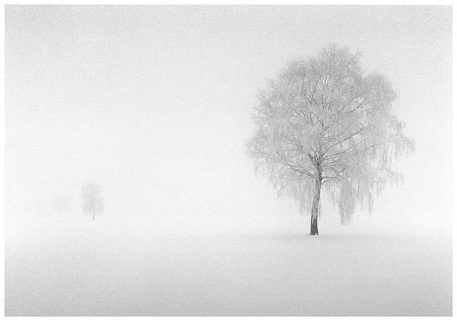 A Whiter Shade of Winter