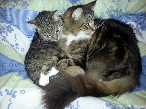 Odiin und Adonis, wahre Katzen-Männer-Freundschaft
