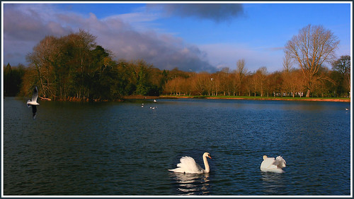 morning lake nature canon wildlife tipperary templemore xmass2012
