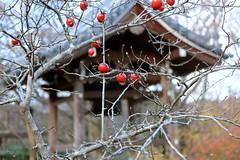 Arashiyama_Jojakkoji6