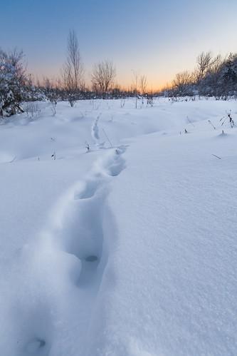 winter sunset snow ontario canada landscape animaltracks smithsfalls