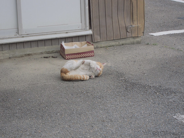 Today's Cat@2013-01-02