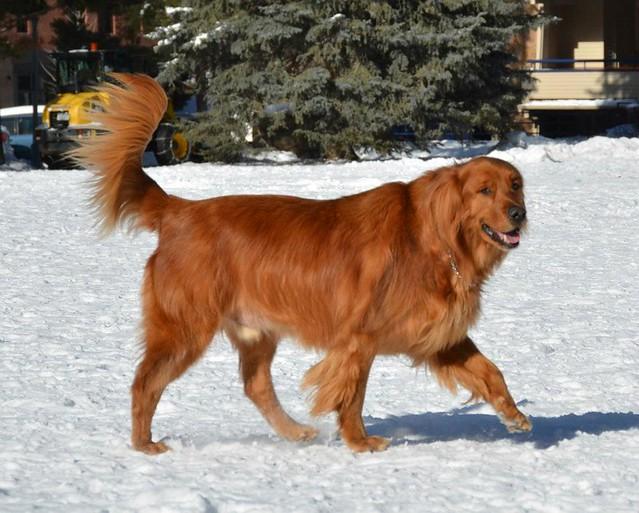 Aspen Pet Dog Collars