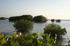 Bahia Salinas Resort: mangroves
