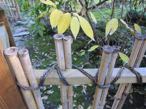 Hakone Japanese Gardens, Saratoga, CA, bamboo IMG_2354