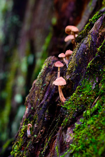 Mushrooms on Metasequoia Trunk