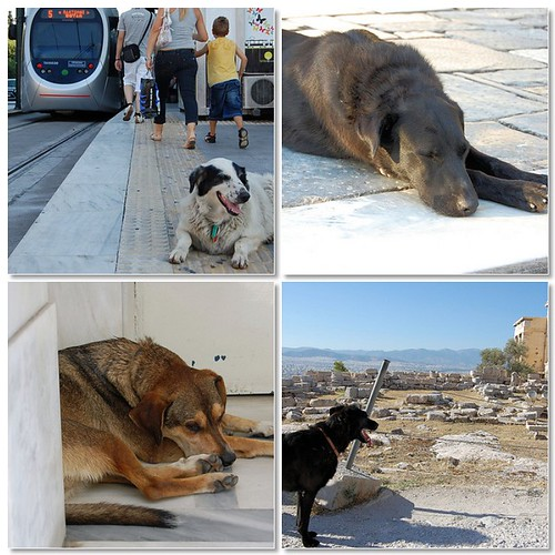 dogs of athens
