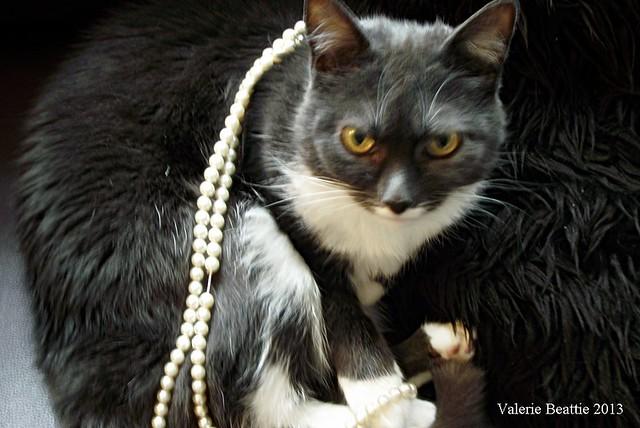 cat wearing pearls