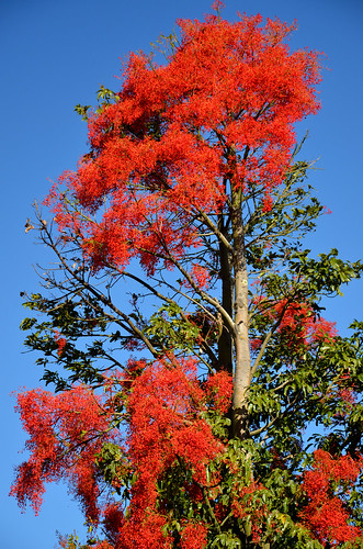Flower TreeX 05