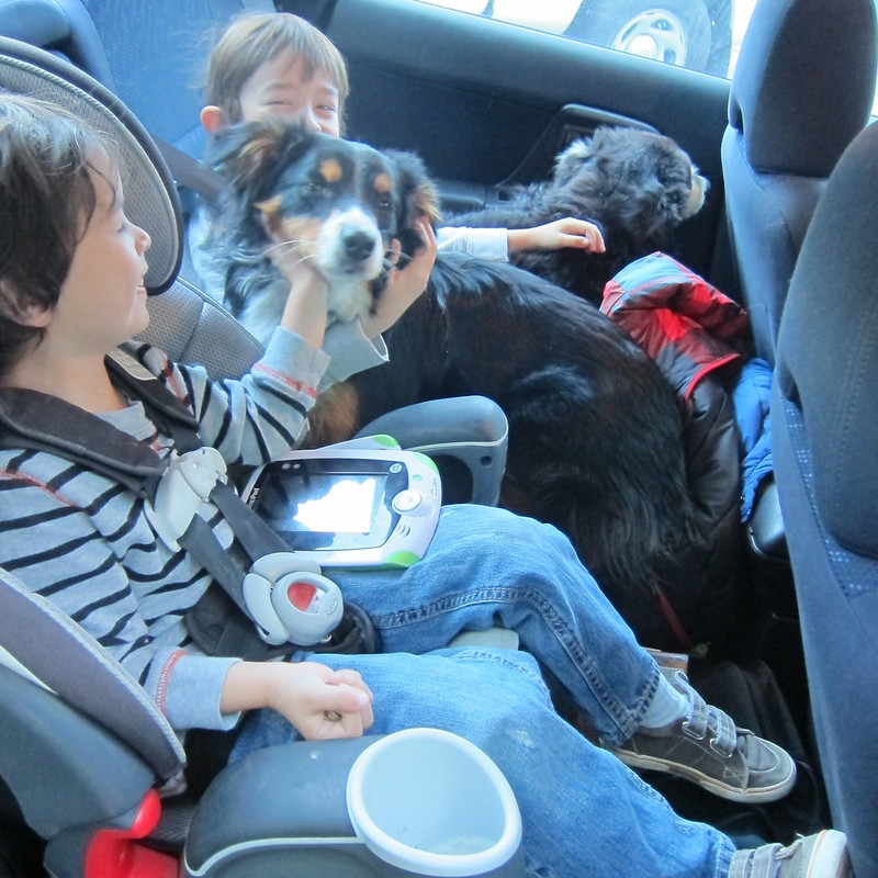 2 kids, 2 dogs and a cat all packed in the backseat