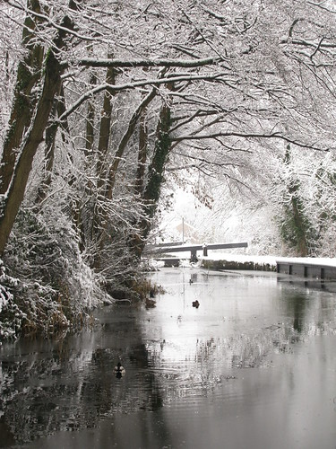 cold ice birds wales landscape branch path newport mallard towpath gwent coth supershot citrit absolutelystunningscapes coth5