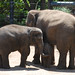 melb zoo jan 2013