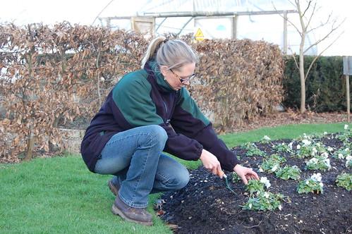 Gardening training courses