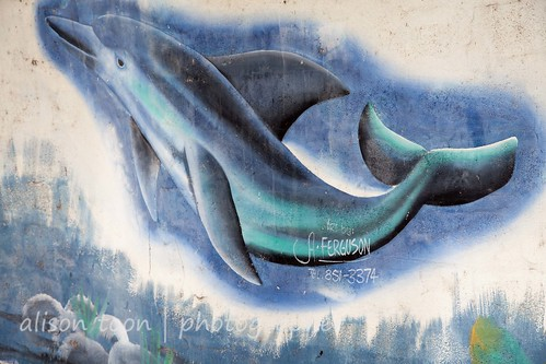 blue sea vacation sky copyright holiday fish streetart art tourism beach water graffiti seaside artwork mural photographer dolphin turquoise paintings restful peaceful tranquility wallart calm jamaica caribbean tranquil montegobay oceancreatures doctorscove alisontoon