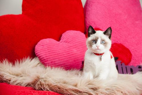 [フリー画像素材] 動物 (哺乳類), 猫・ネコ ID:201303201000