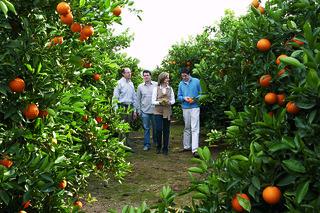 Paseando por los naranjales de Cullera.