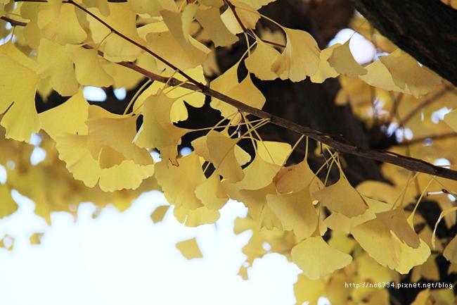 20121206_XmasTokyo_1299 f