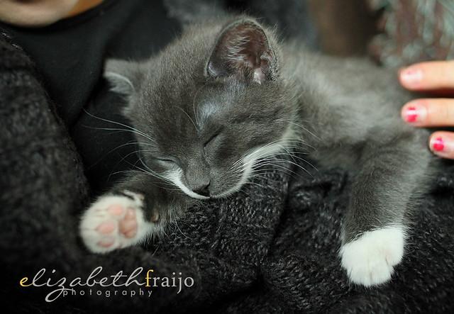 Kitty03W