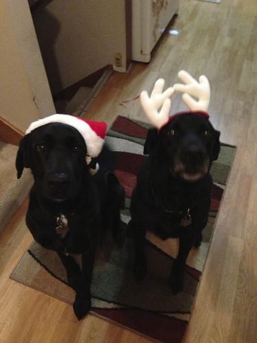 Festive Pups