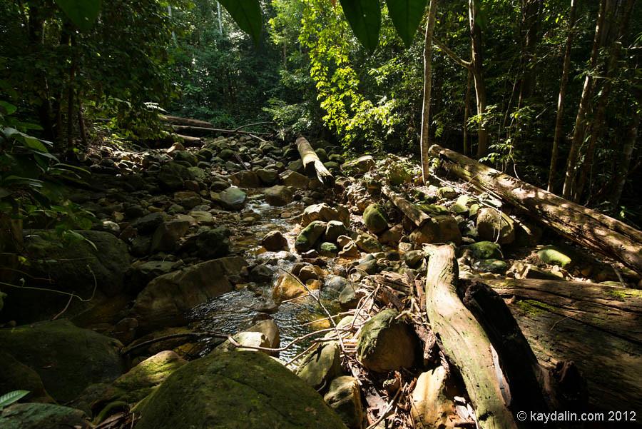 лес в дамай, борнео