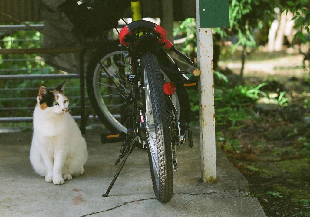自転車と猫